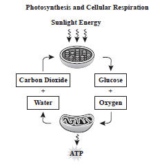 SC 912 L 18 9 Photosynthesis and Cellular Respiration