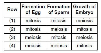 mitosis table.jpg